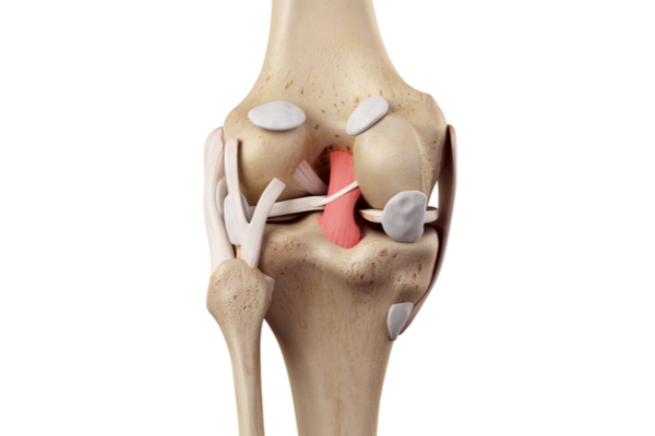 https://www.chirurgieartroscopica.ro/wp-content/uploads/2021/06/ligamant-incrucisat-posterior.jpg